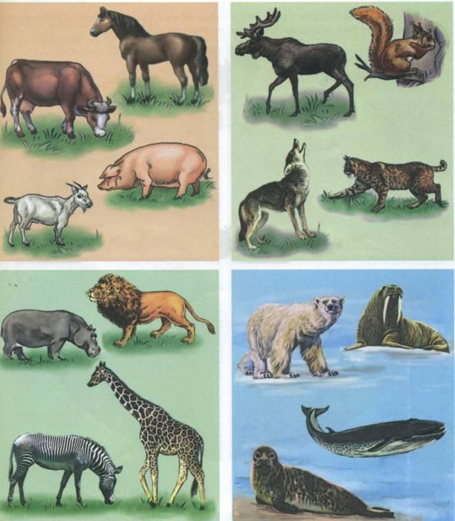 савельев признает картинки животные севера и животные жарких страница это